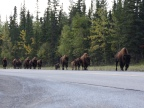 Wildlife Safari in Northeastern British Columbia